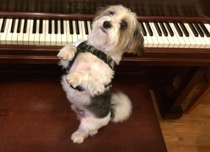 sparky piano